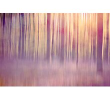 dreamy forest Photographic Print