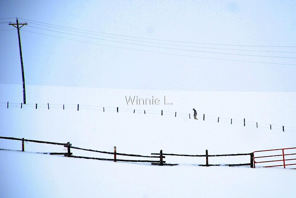 Snow by Winnie L.