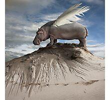 Hippofly Photographic Print