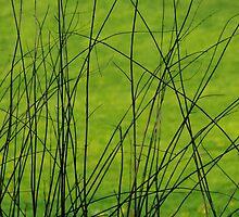 Grass by Bluesrose