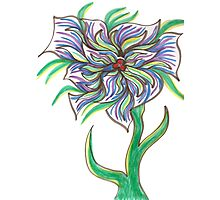 Drawing Day Daffy Daisy Photographic Print