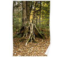 Tree on stilts! Poster