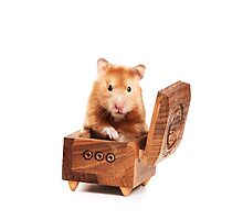 Hamster in a red box Photographic Print