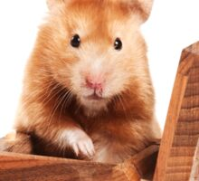 Hamster in a red box Sticker