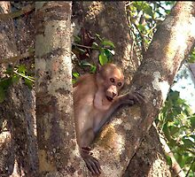 Cheeky Monkey! (Photographed in the wild in Thailand) by Mouldy67