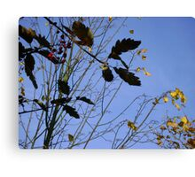 Flying South - autumn leaves, Burntisland Canvas Print