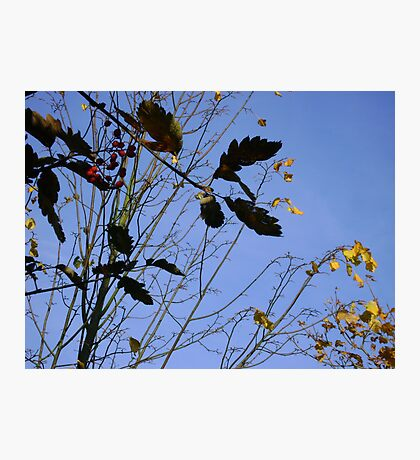 Flying South - autumn leaves, Burntisland Photographic Print