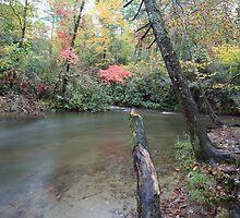 Abrams Creek  by kathy s gillentine