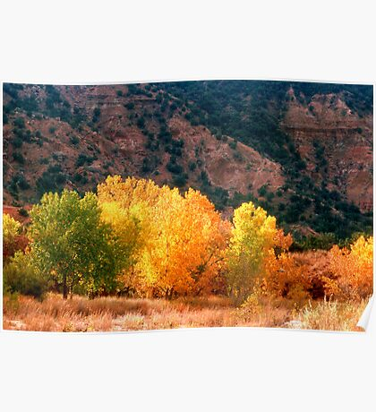 Western fall colors Poster