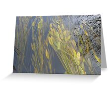Plants Under Water in the River Greeting Card
