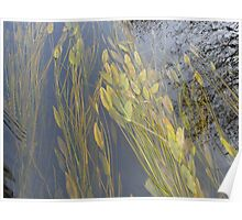 Plants Under Water in the River Poster