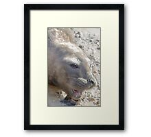 Seal Framed Print