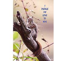 I Pledge my Love To You  Photographic Print