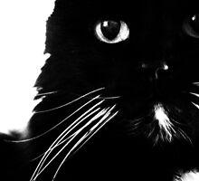 White on Black by Ashley Espolt