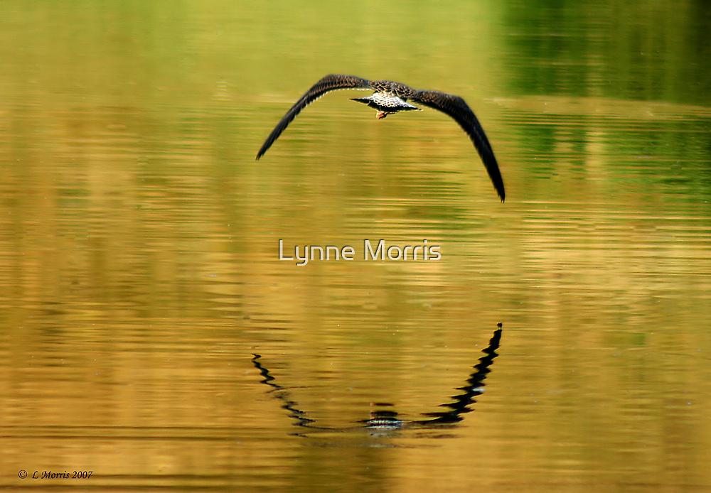 On Golden Pond by Lynne Morris
