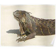Grandpa Iguana Poster