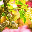 Painted Eastern House Wren In Spring by daphsam