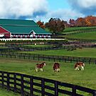 Autumn day in the Pasture by Jeff Palm Photography