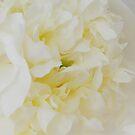 Cream peony by shalisa
