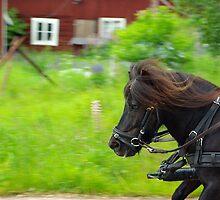 Shetlands Pony #3 by MarianaEwa