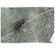 fly with winter coat Poster