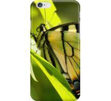 Eastern Tiger iPhone Case/Skin