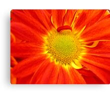 *MUMS THE WORD* Canvas Print