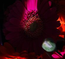 Gerberas. Glowing warmth. by Lozzar Flowers & Art