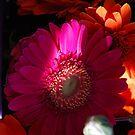 Gerberas. Pink Romance. by Lozzar Flowers & Art