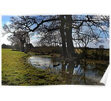 Dappled reflections Poster