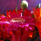 Gerberas.  Pink Candy. by Lozzar Flowers & Art