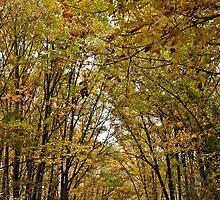 Walking In The Woods by Liviu Leahu