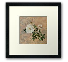 Old Fashioned Rose Framed Print