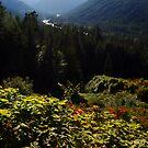 Autumn in Rainier by Gary Lee Parker
