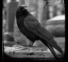 Black And White Crow by gothicolors