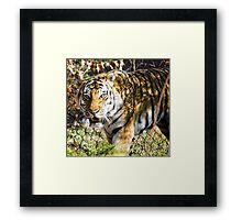 Ferocious Feline Framed Print