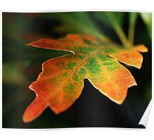 Oak Leaf 2 Poster