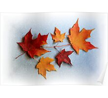 Maple Leaves Poster