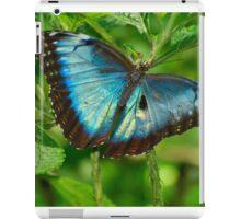 NEW BORN MORPHO, Costa Rica iPad Case/Skin