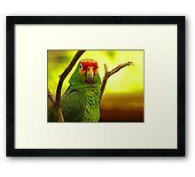 Portrait of a Parrot Framed Print