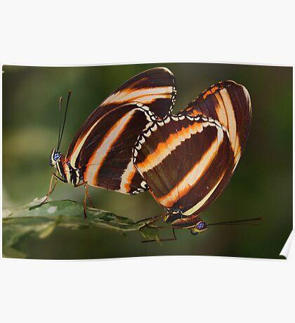 Best Butties - Orange Tigers Poster