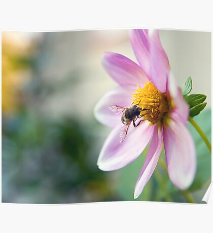 Bee on the work Poster