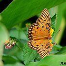 butterfly's feast by jweekley