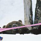 Gummy bear by Susan Littlefield