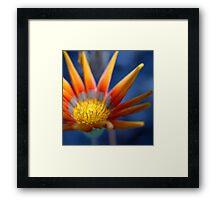 Bright Seeker  © Framed Print