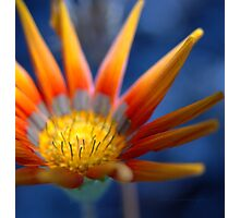 Bright Seeker  © Photographic Print