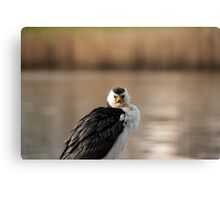 Don't Mess with me, Bro! Canvas Print