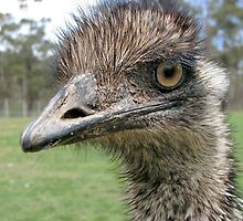 Ostrich (in Tassy zoo) by Alexey Dubrovin