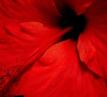 Red Temptation, Hibiscus  by Guy C. André Tschiderer