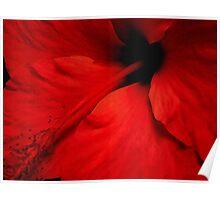 Red Temptation, Hibiscus  Poster